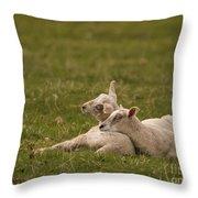 Sleepy Lamb Throw Pillow