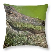 Sleepy Papa Gator Throw Pillow