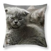 Slumbering Cat Throw Pillow