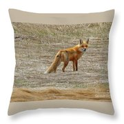 Sly Fox 5785 Throw Pillow