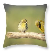 Small And Large Throw Pillow