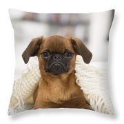 Small Brabant Griffon, Petit Brabancon, Dog  Throw Pillow