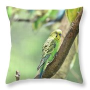 Small Budgie Birds With Beautiful Colored Feathers Throw Pillow