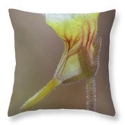 Small Butterwort Throw Pillow
