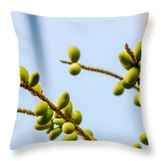 Small Coconuts I Throw Pillow