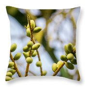 Small Coconuts Throw Pillow