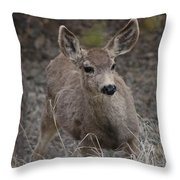 Small Fawn In Tombstone Throw Pillow