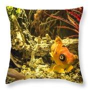 Small Fish In An Aquarium Throw Pillow