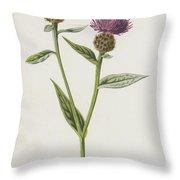 Small Knapweed  Throw Pillow