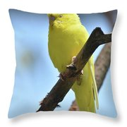 Small Yellow Budgie Parakeet In The Wild Throw Pillow