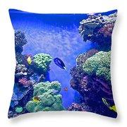 Smaller Fish In Monterey Aquarium-california  Throw Pillow
