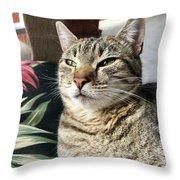 Smartycat Throw Pillow
