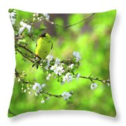 Smelling The Cherry Blossom Male  American Goldfinch Throw Pillow