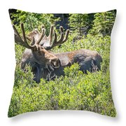 Smiling Bull Moose Throw Pillow