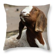 Smiling Goat  Throw Pillow