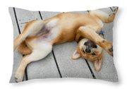 Smiling Puppie Throw Pillow
