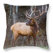 Smoky Mountain Elk II - North Carolina's Cataloochee Valley Wildlife Throw Pillow