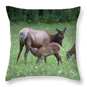 Smoky Mountain National Park Elk Cow Nursing Calf Throw Pillow