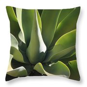 Smooth Agave Throw Pillow