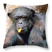Snacking Chimpanzee II Throw Pillow