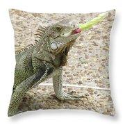 Snacking Iguana On A Concrete Walk Way Throw Pillow