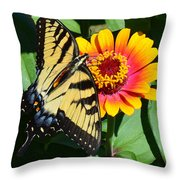 Snacking Tiger Swallowtail Butterfly Throw Pillow