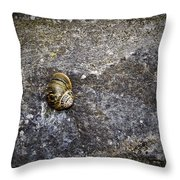 Snail At Ballybeg Priory County Cork Ireland Throw Pillow