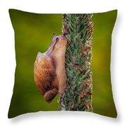 Snail Climbing The Tall Grass Throw Pillow