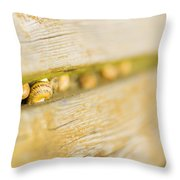 Snails Throw Pillow by Stefano Piccini