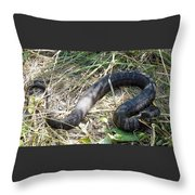 Snake So Pretty Throw Pillow