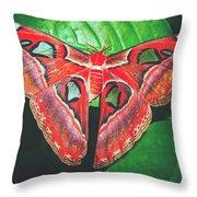 Snakehead Moth Throw Pillow