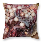 Snapping Turtle Dissection Throw Pillow