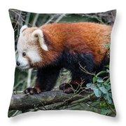 Sneaky Red Panda Throw Pillow