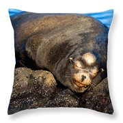Snoozing Throw Pillow
