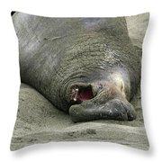 Snoring Elephant Seal Throw Pillow