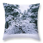 Snow Burdened Tree In The Flatirons Throw Pillow