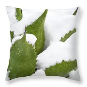 Snow Covered Agave Throw Pillow