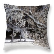 Snow Covered Black Oak Yosemite National Park Throw Pillow
