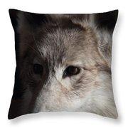 Snow Coyote Throw Pillow