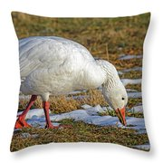 Snow Goose Feeding In A Field Throw Pillow