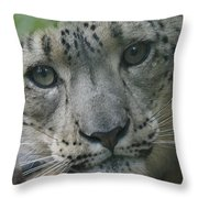 Snow Leopard 10 Throw Pillow