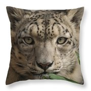 Snow Leopard 13 Throw Pillow