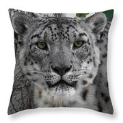 Snow Leopard 5 Posterized Throw Pillow