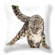 Snow Leopard On The Prowl Viii Throw Pillow