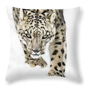 Snow Leopard On The Prowl X Throw Pillow