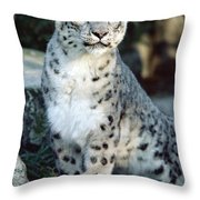 Snow Leopard Uncia Uncia Portrait Throw Pillow