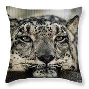 Snow Leopard Upclose Throw Pillow