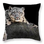 Snow Leopard Xxii Throw Pillow