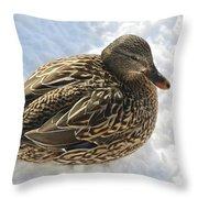 Snow Mallard Throw Pillow