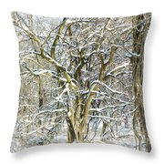 Snow On A Hedge Tree Throw Pillow